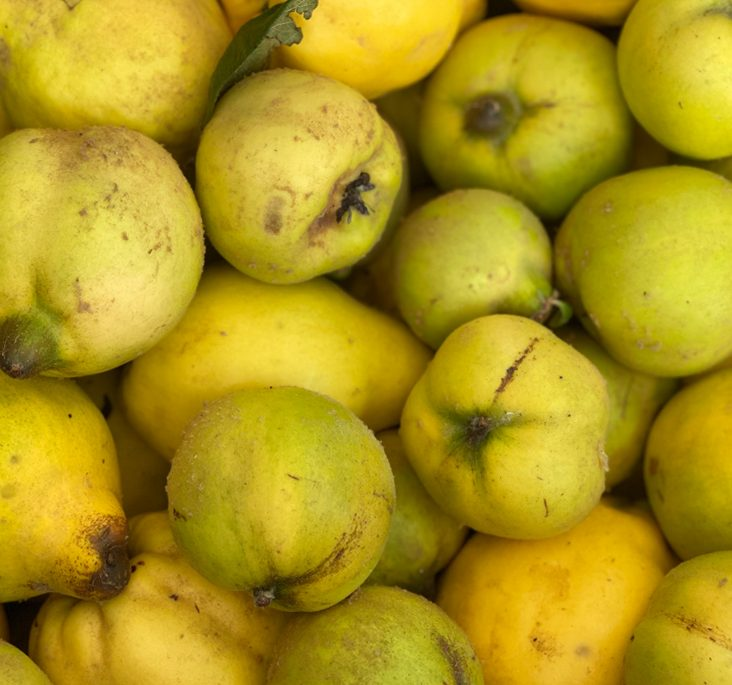 small - quince